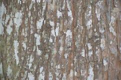 Fundo da casca de árvore Textura capaz da telha de Brown Fotografia de Stock Royalty Free