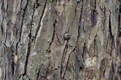 Fundo da casca de árvore Textura capaz da telha de Brown Imagem de Stock