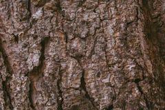 Fundo da casca de pinheiro Textura da árvore de casca Textura e fundo abstratos para o projeto gráfico Textura orgânica Sumário á Fotos de Stock