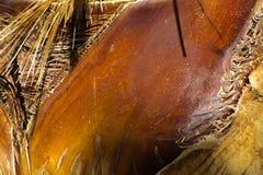 Fundo da casca de uma palmeira Fotografia de Stock Royalty Free
