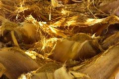 Fundo da casca de uma palmeira Fotos de Stock