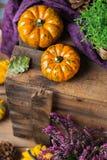 Fundo da colheita do outono da queda com a abóbora festiva decorativa da ação de graças Fotografia de Stock Royalty Free