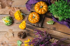 Fundo da colheita do outono da queda com a abóbora festiva decorativa da ação de graças Imagem de Stock Royalty Free