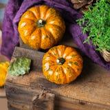 Fundo da colheita do outono da queda com a abóbora festiva decorativa da ação de graças Imagens de Stock Royalty Free