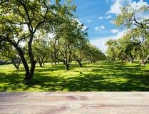 Fundo da ecologia da floresta do parque imagem de stock royalty free
