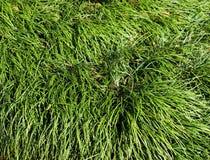 Fundo da escova da grama do ornamento Fotos de Stock