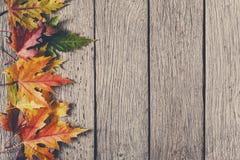 Fundo da estação do outono, folhas de bordo amarelas Imagens de Stock