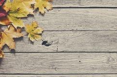 Fundo da estação do outono, folhas de bordo amarelas Imagens de Stock Royalty Free