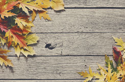 Fundo da estação do outono, folhas de bordo amarelas Imagem de Stock