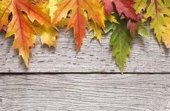 Fundo da estação do outono, folhas de bordo amarelas Fotos de Stock