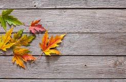 Fundo da estação do outono, folhas de bordo amarelas Imagem de Stock Royalty Free