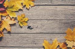 Fundo da estação do outono, folhas de bordo amarelas Fotografia de Stock Royalty Free