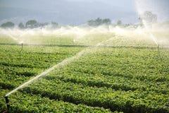 Fundo da exploração agrícola, sistema de irrigação foto de stock royalty free