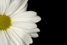 Fundo da flor fotos de stock