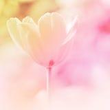 Fundo da flor Imagens de Stock