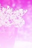 Fundo da flor Imagem de Stock