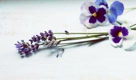 Fundo da flor da alfazema Imagem de Stock Royalty Free