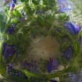 Fundo da flor azul com as folhas do verde congeladas no gelo imagens de stock