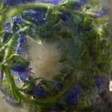 Fundo da flor azul com as folhas do verde congeladas no gelo fotos de stock royalty free