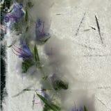 Fundo da flor azul com as folhas do verde congeladas no gelo imagem de stock