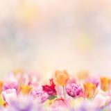 Fundo da flor da mola Fotografia de Stock Royalty Free