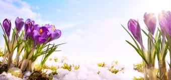 Fundo da flor da mola da arte Fotos de Stock