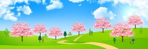 Fundo da flor da mola da cereja Imagens de Stock Royalty Free