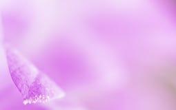 Fundo da flor da pétala de Lila. fotos de stock