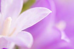 Fundo da flor da pétala de Lila. imagem de stock royalty free
