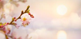 Fundo da flor de Art Spring; Paisagem da Páscoa Imagens de Stock Royalty Free
