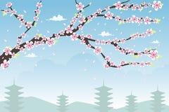 Fundo da flor de cereja Fotografia de Stock Royalty Free