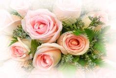 Fundo da flor de Rosa para o dia de Valentim Copie o espaço foto de stock royalty free