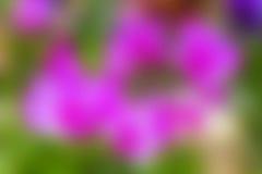 Fundo da flor do borrão Fotos de Stock Royalty Free