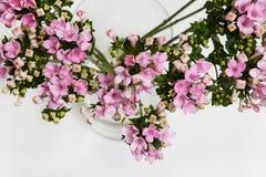 Fundo da flor do grupo de flores lilás Imagens de Stock