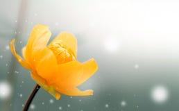 Fundo da flor em botão Foto de Stock Royalty Free