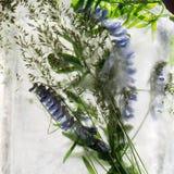 Fundo da flor da ervilha azul com as folhas do verde congeladas no gelo imagem de stock royalty free
