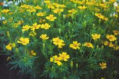 Fundo da flor Flores bonitas feitas com filtros de cor Imagem de Stock