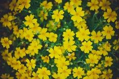 Fundo da flor Flores bonitas feitas com filtros de cor Imagem de Stock Royalty Free