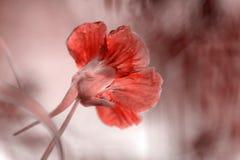 Fundo da flor na cor do ano 2019 Pantone - coral de vida imagens de stock royalty free