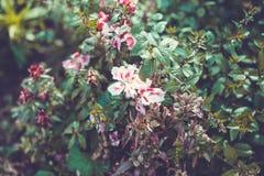 Fundo da flor no jardim do verão Fotos de Stock Royalty Free