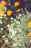Fundo da flor no jardim do verão Imagem de Stock