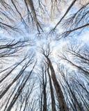 Fundo da floresta Fotos de Stock Royalty Free