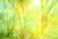 Fundo da floresta da luz do sol Fotografia de Stock