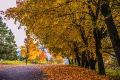 Fundo da floresta de Autum com um colorido das folhas de outono Foto de Stock