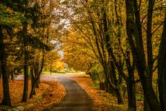 Fundo da floresta de Autum com um colorido das folhas de outono Imagens de Stock Royalty Free