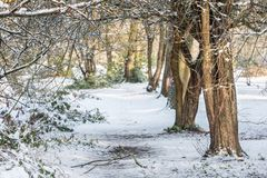 Fundo da floresta do inverno foto de stock