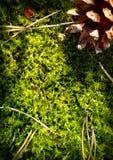 Fundo da floresta do outono Fotografia de Stock Royalty Free