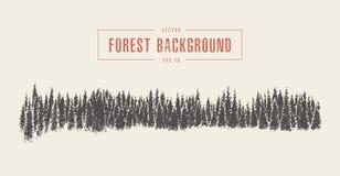 Fundo da floresta do pinho, vetor tirado, esboço ilustração royalty free