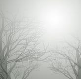 Fundo abstrato da floresta Fotos de Stock Royalty Free