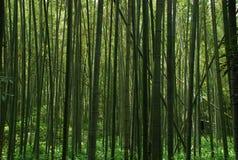 Fundo da floresta dos bambus Fotos de Stock Royalty Free